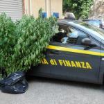 05.07.2013 - piantagione marijuana (1)