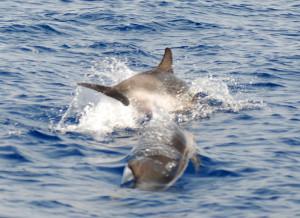 Delfini 14 LD