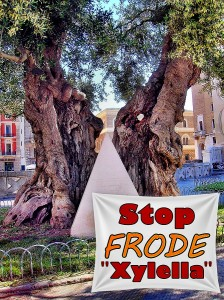 STOP FRODE ''XYLELLA'' - Ulivo simbolico in piazza Sant'Oronzo a Lecce